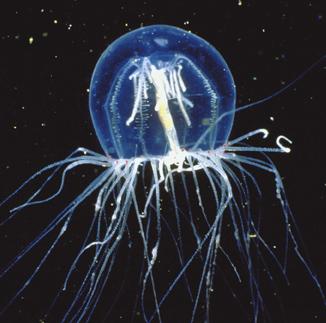 Jellyfish Gotham
