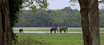 Lahugala herds